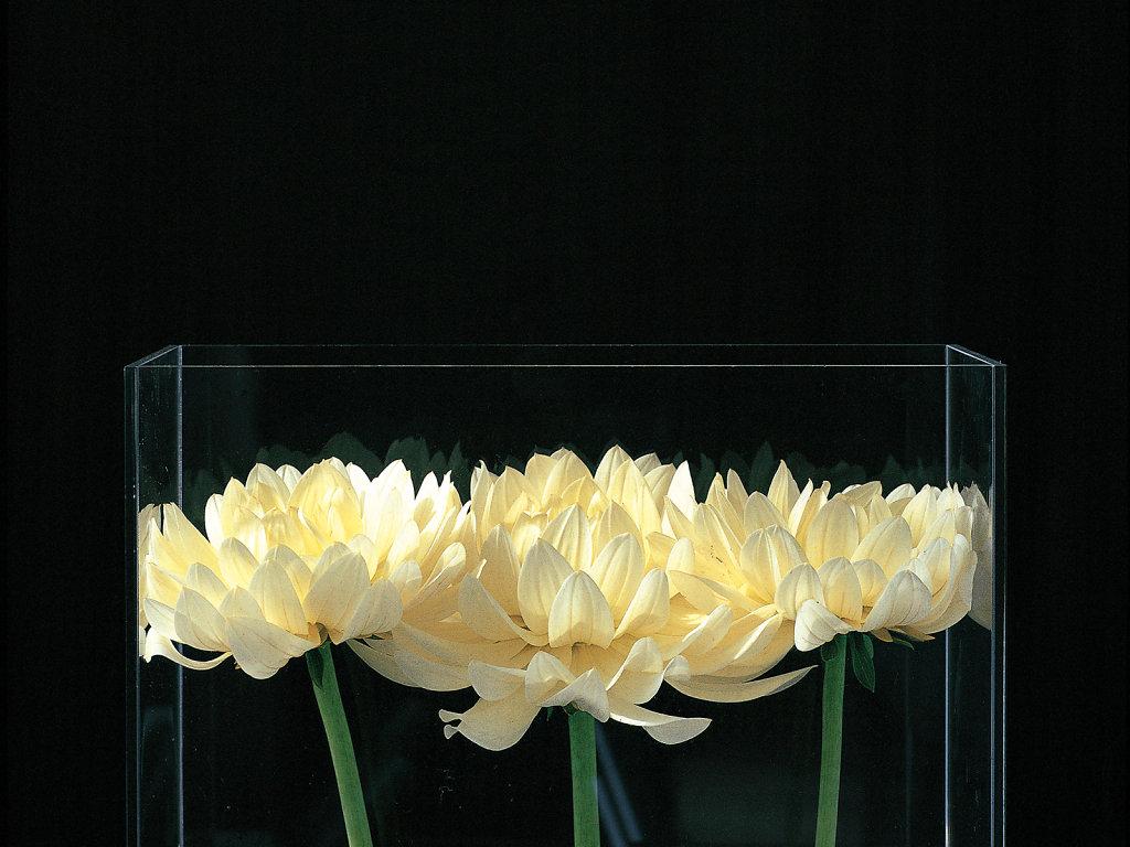 Flowers-and-artichoke-portfolio.jpg